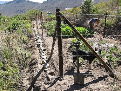 The new porcupine proof vegetable garden