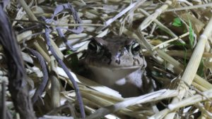 Happy Toad at Simonskloof