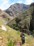 Gecko Trail - with our border collies