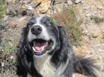 Our bordercollie Kanda - by Gerard Cook