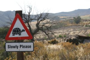 Take it Slowly Please at Simonskloof Mountain Retreat